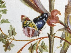 Brumidi's version of the Purple Emperor butterfly, Apatura iris, native to Europe