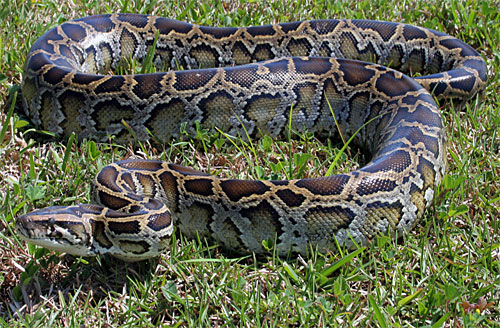 CSI Action Is for the Birds – and Pythons