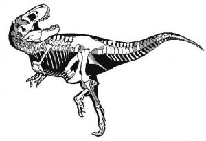 Tyrannosaurus, from the paper by Sampson and Loewen. The grey areas represent the parts of the skeleton they recovered.