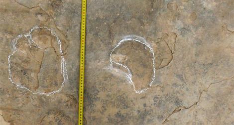 Sauropod Tracks Spain's Tiny Sauropo...