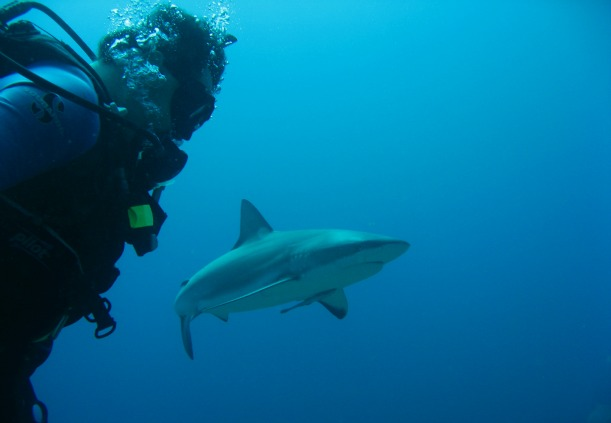 Shark and diver