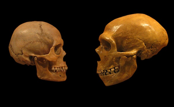 science shows why you're smarter than a neanderthal | science, Skeleton