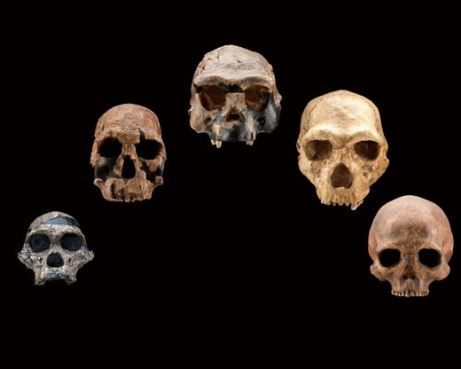 skulls_arc_frontal