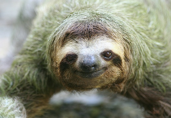 additional sos sloths for sale