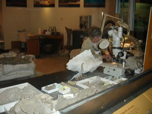 A preparator at work in the fossil lab at the National Museum of Natural History. From Flickr user szlea.