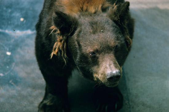 smokey bear the spokesman and national zoo highlight at the