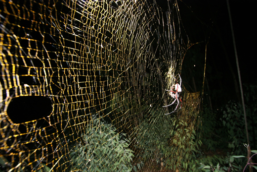 Check out the size of that web! Photo by M. Kuntner.