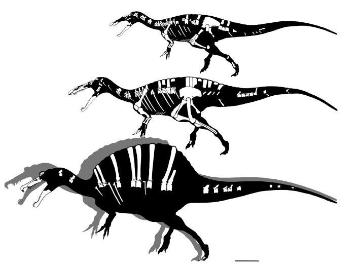 spinosaurs-hartman.jpg