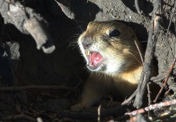 Garden Fence Banishes Animals: Guía para las barreras de la ardilla: Más información