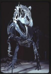 T. Rex Fossil
