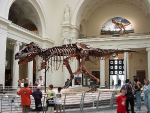 The skeleton of Tyrannosaurus rex. From Wikipedia.