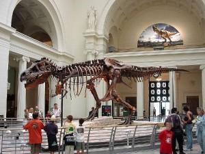 The skeleton of Tyrannosaurus rex. From Wikipedia.