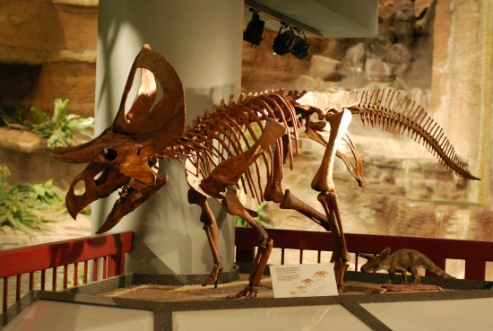 Natural History Museum Dinosaurs Closed