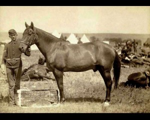 Comanche, the only U.S. Army survivor in the Battle of Little Bighorn, photographed in 1887