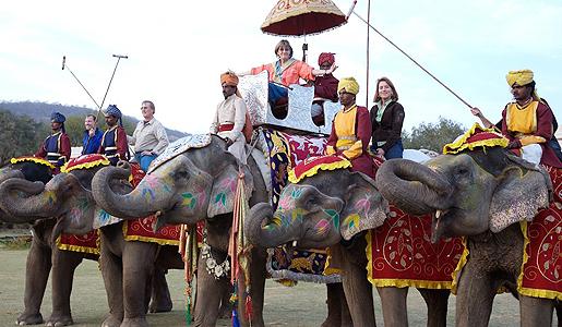 Elephant polo line up
