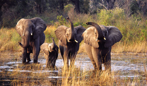 Elephants at a watering hole.    Photo: Leo Dos Remedios