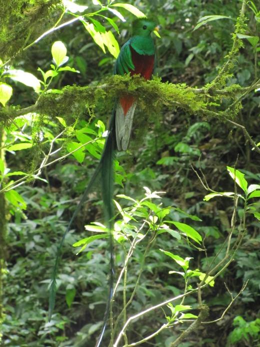 A Resplendent Quetzal, Costa Rica.