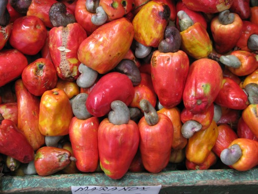 Marañón (cashew nut) fruit