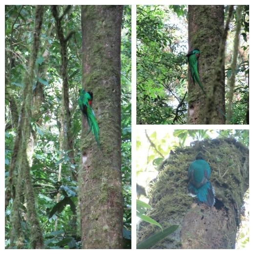 Quetzals, Costa Rica