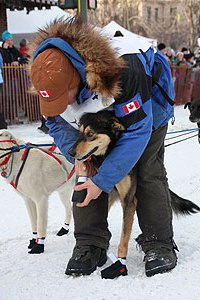 A handler fits a dog with protective booties at the Iditarod. Photo: Alyssa Bobst