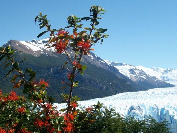 Vista of Perito Moreno. Photo: Allison Dale