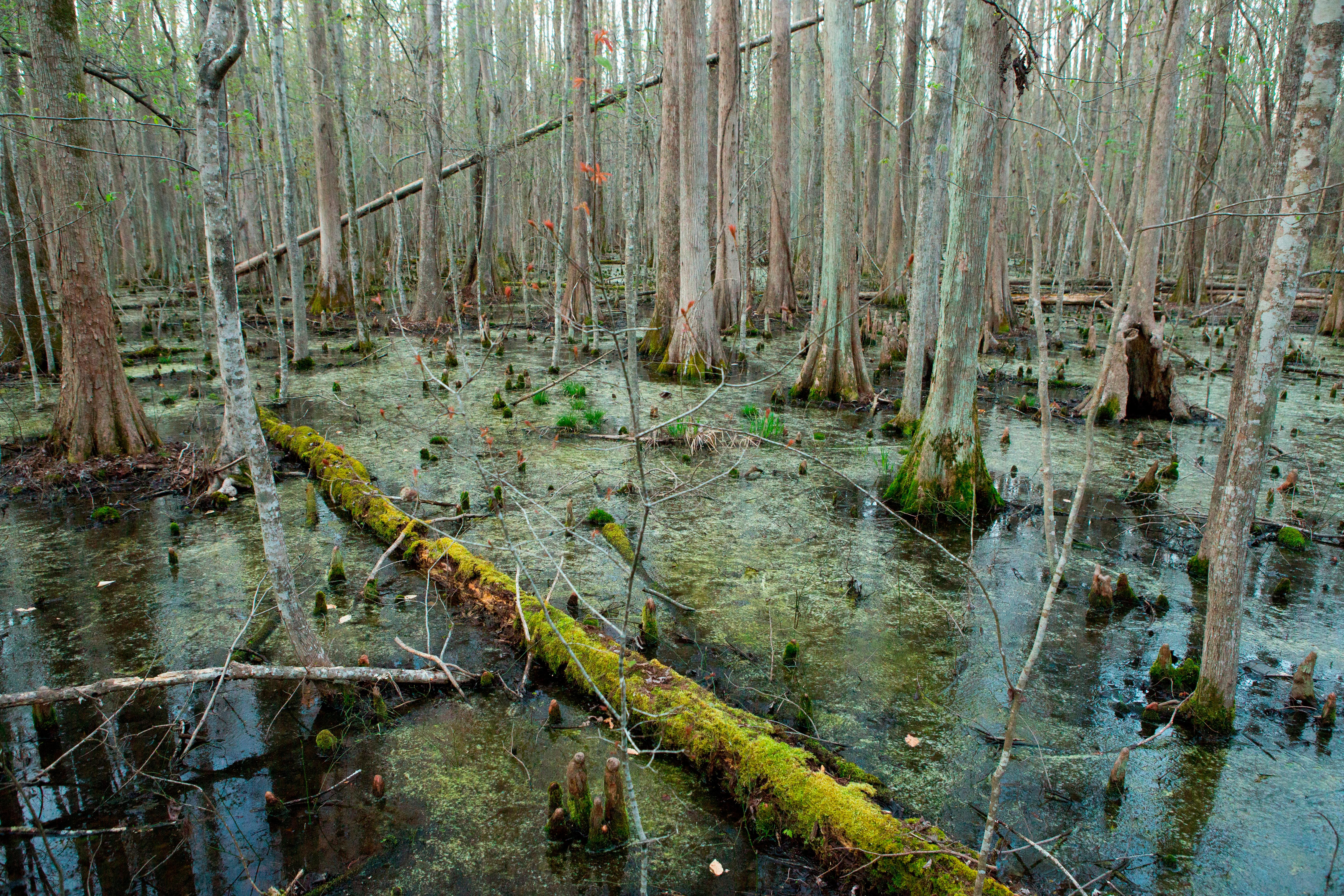 Comfortable Furniture Deep In The Swamps Archaeologists Are Finding How