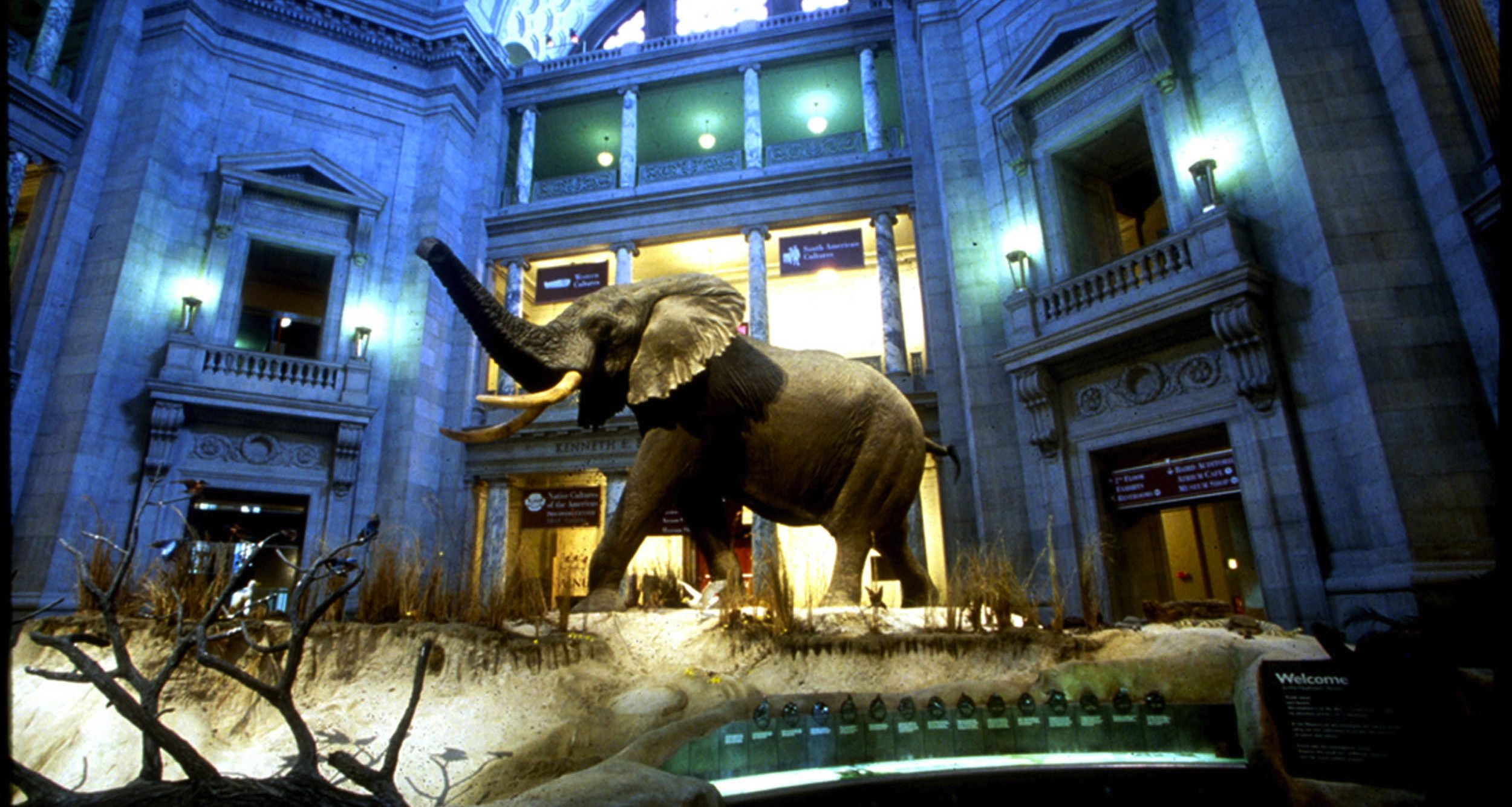 Chicago Museum Of Natural History Hours