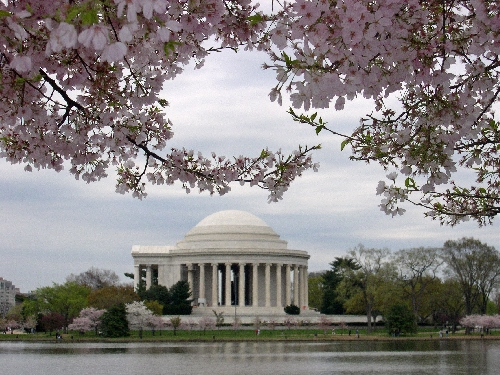 Cherry blossoms frame the Jefferson Memorial in spring. Photo by Laura Campbell