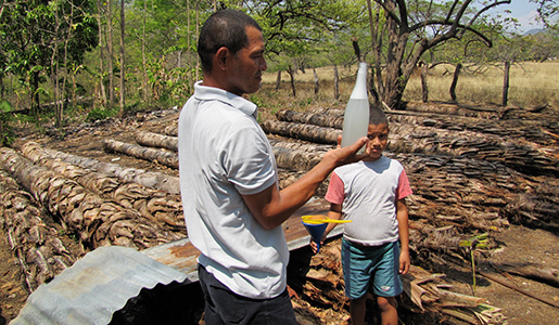 A Costa Rican farmer and his son filter and bottle palm wine collected from the trunks of palm trees. March 31, 2013. Photo by Jim Karr.