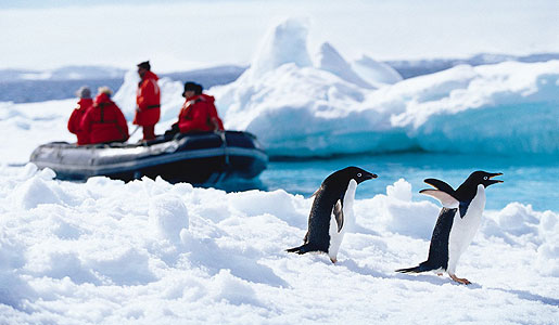 Get an up-close look at wildlife in Antarctica