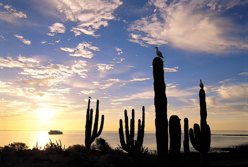 The beautiful desert landscape of Baja California with our expedition ship in the background. Photo: Ralph Lee Hopkins